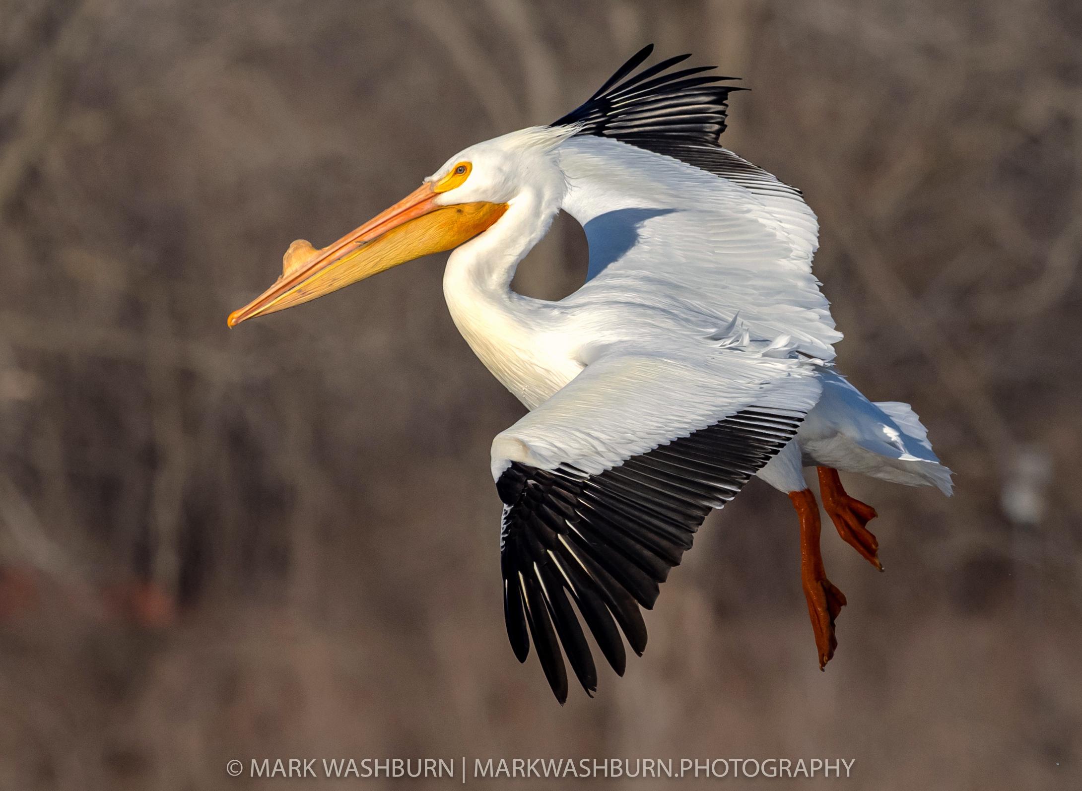 An Old Bird